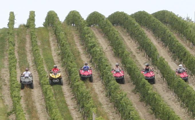 Quadfahrer in den Weinbergen
