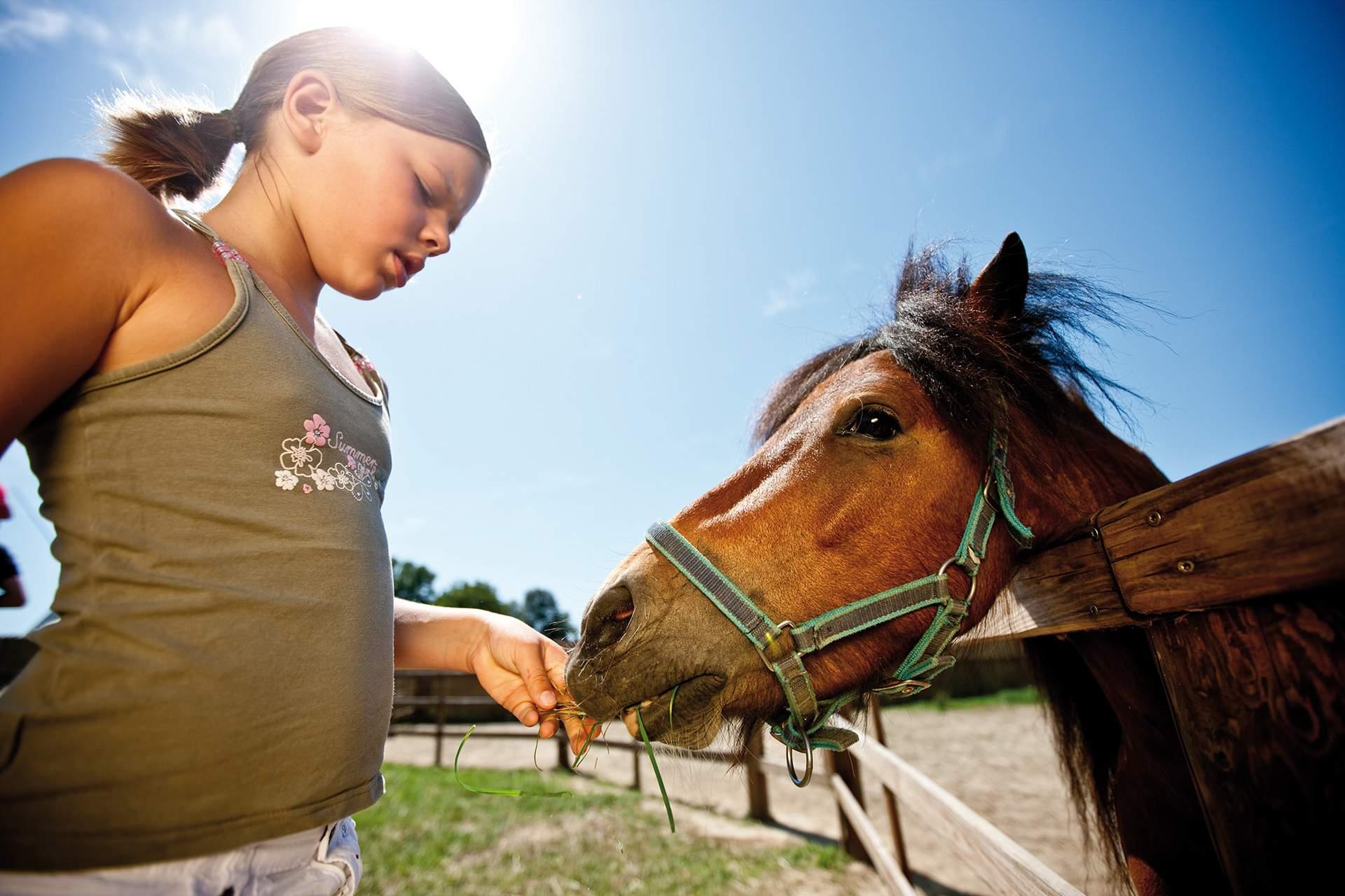 Pferde streicheln im Streichelzoo