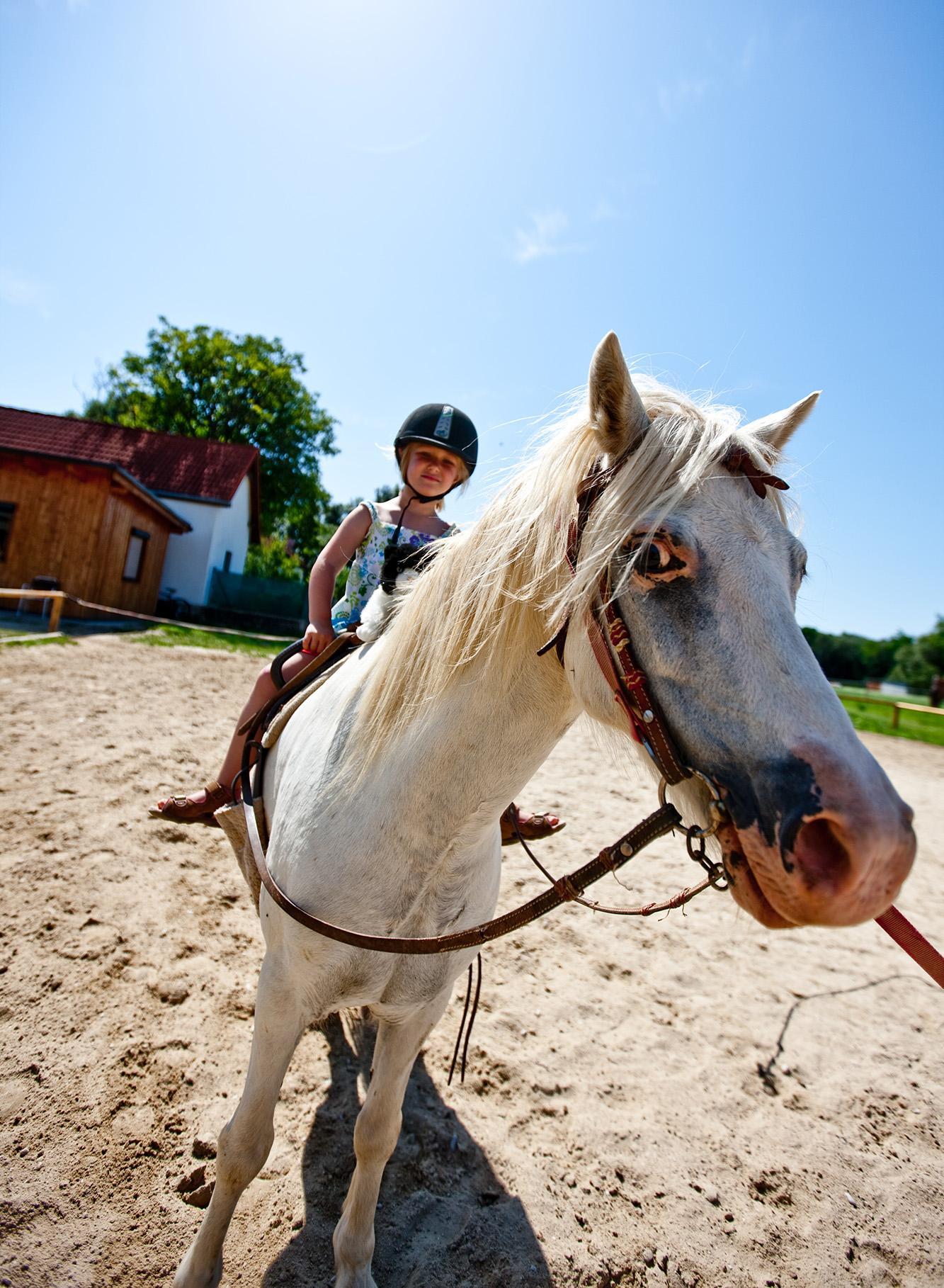 Ponys und Pferde reiten